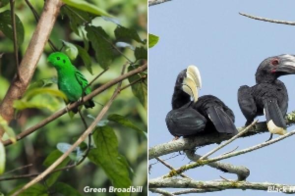 Borneo 2020 - Inala Nature Tours