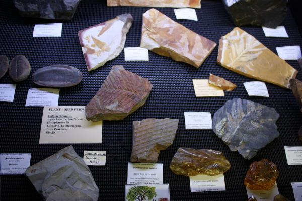 Fossilised plants and amber