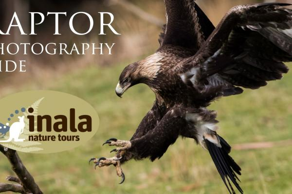 Inala Raptor Photography Hide - Alfred Schulte