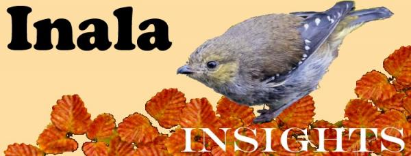Inala Insights Newsletter - 40 Spotted Pardalote - Photograph Alfred Schulte