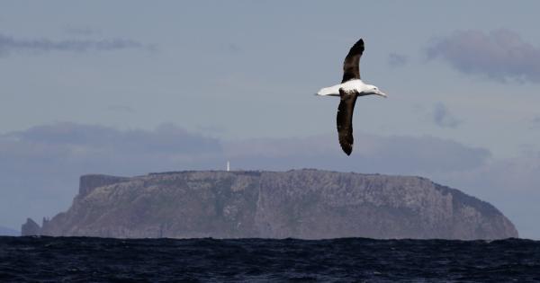 Northern Royal Albatross - Paul Brooks - Inala Nature Tours