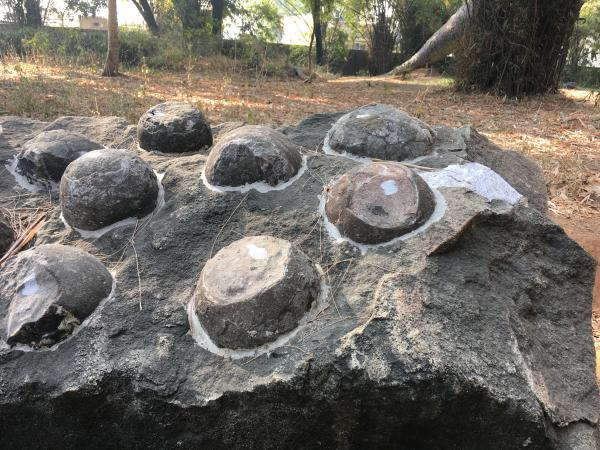 Fossil Eggs - Soar - Inala Nature Tours