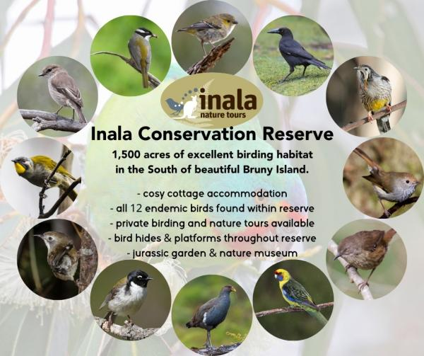 All twelve Tasmanian Endemic Birds have their home within the Inala Reserve