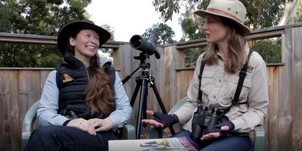 Cat D and Cat Y - Beginner Birdwatching Video