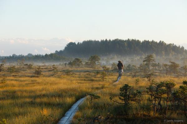 Peat Bog - Jarek Joepera - Inala Nature Tours